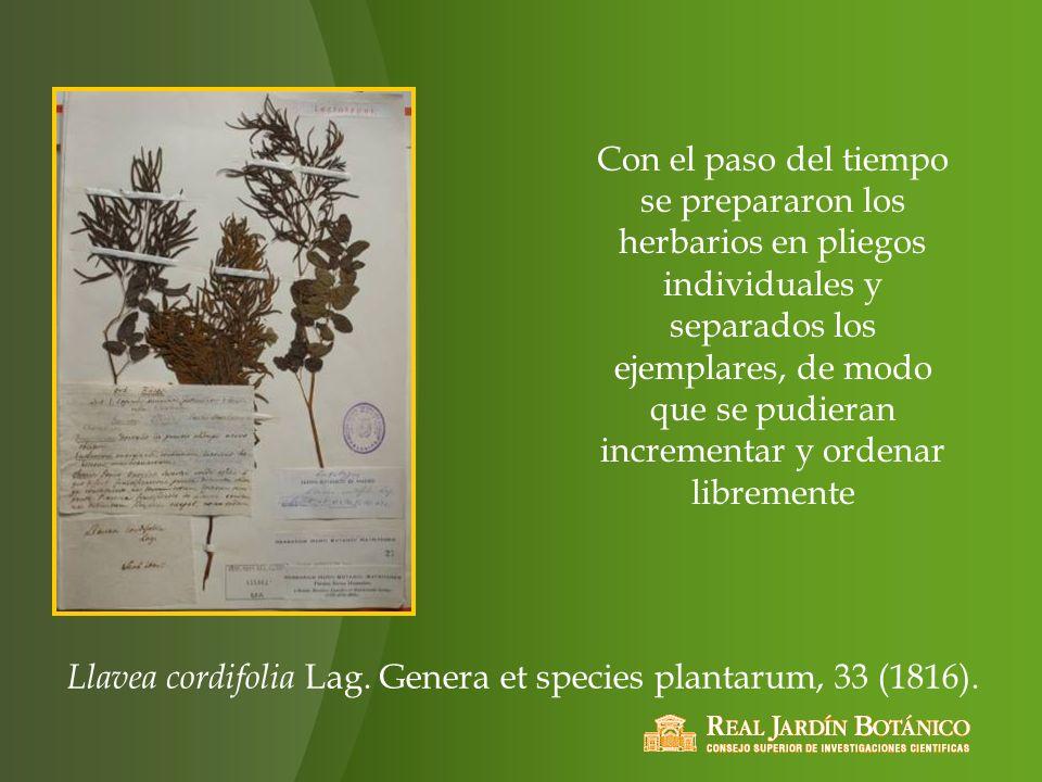 Con el paso del tiempo se prepararon los herbarios en pliegos individuales y separados los ejemplares, de modo que se pudieran incrementar y ordenar l