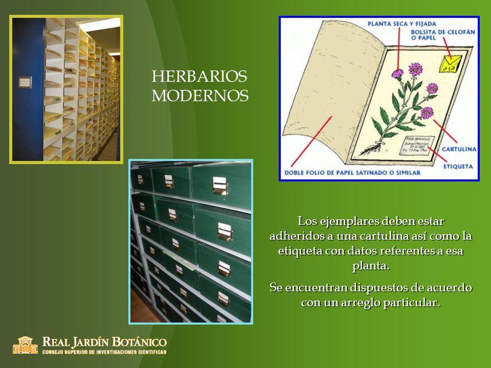 Los ejemplares deben estar adheridos a una cartulina así como la etiqueta con datos referentes a esa planta. Se encuentran dispuestos de acuerdo con u