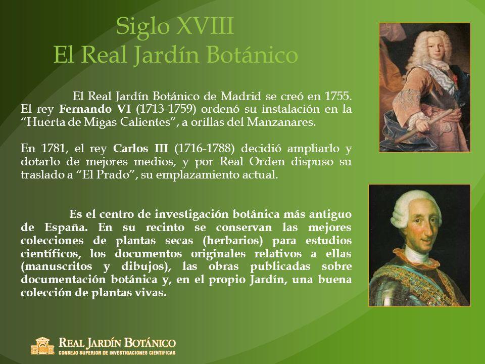 Siglo XVIII El Real Jardín Botánico El Real Jardín Botánico de Madrid se creó en 1755. El rey Fernando VI (1713-1759) ordenó su instalación en la Huer