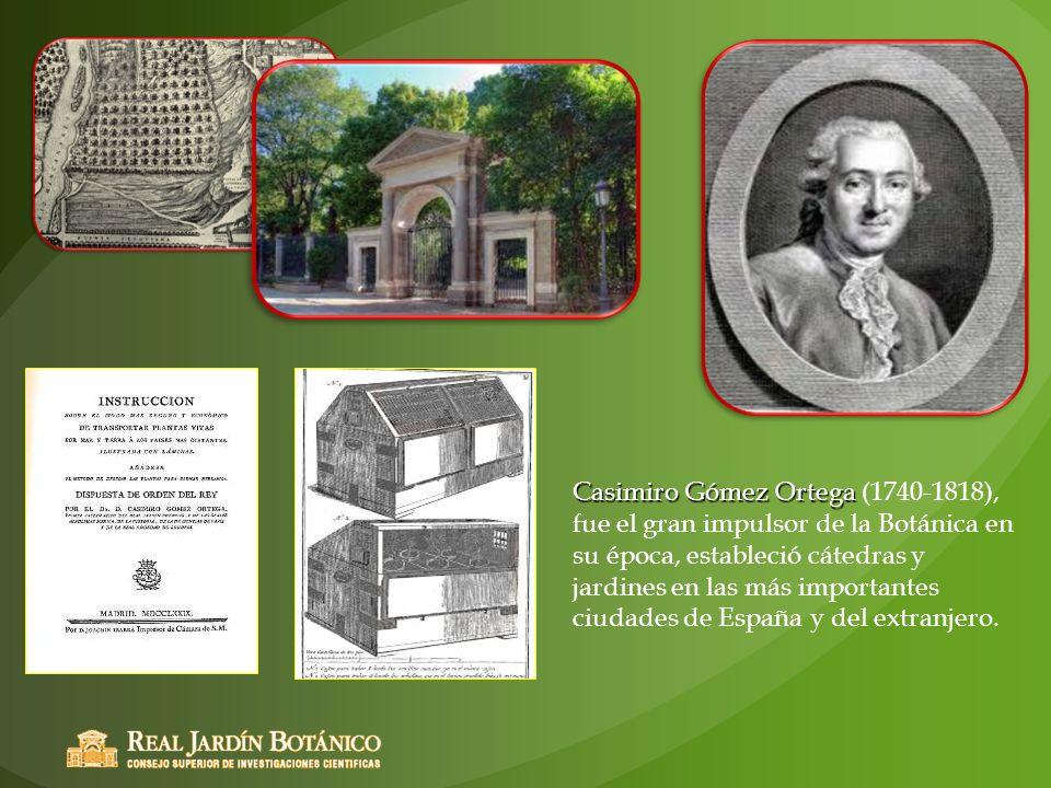 Casimiro Gómez Ortega Casimiro Gómez Ortega (1740-1818), fue el gran impulsor de la Botánica en su época, estableció cátedras y jardines en las más im