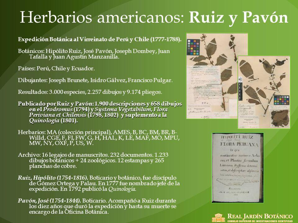 Herbarios americanos: Ruiz y Pavón Expedición Botánica al Virreinato de Perú y Chile (1777-1788). Botánicos: Hipólito Ruiz, José Pavón, Joseph Dombey,
