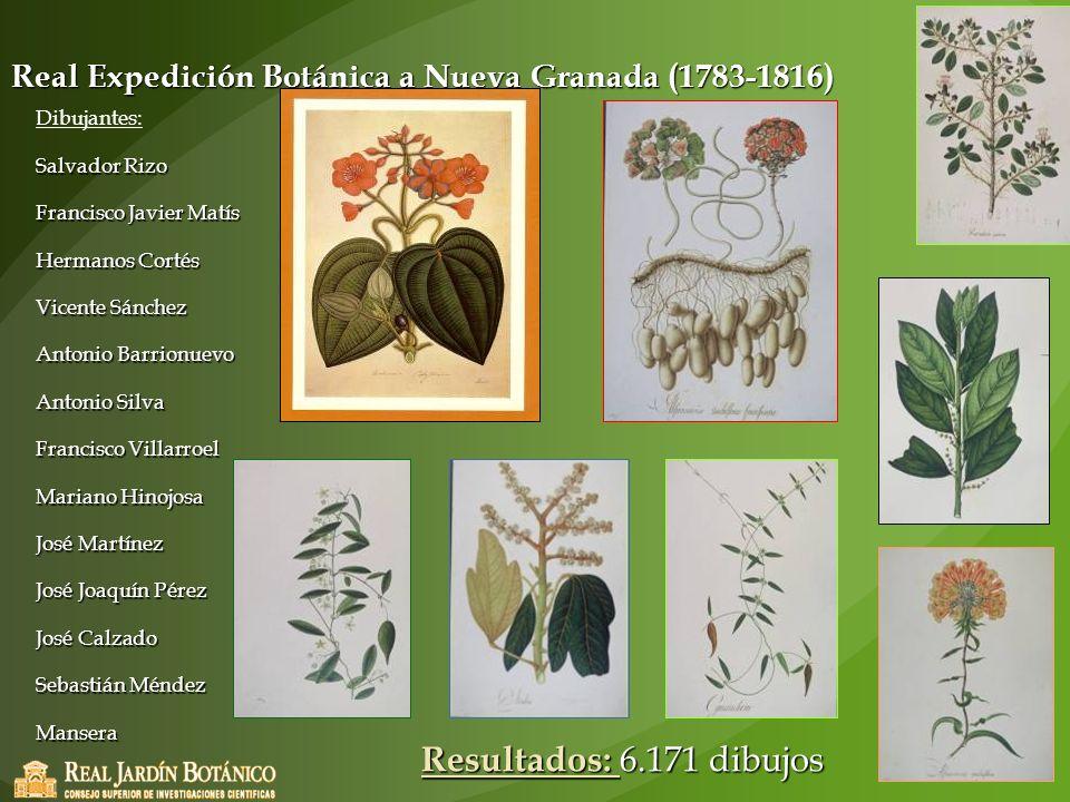 Real Expedición Botánica a Nueva Granada (1783-1816) Dibujantes: Salvador Rizo Francisco Javier Matís Hermanos Cortés Vicente Sánchez Antonio Barrionu