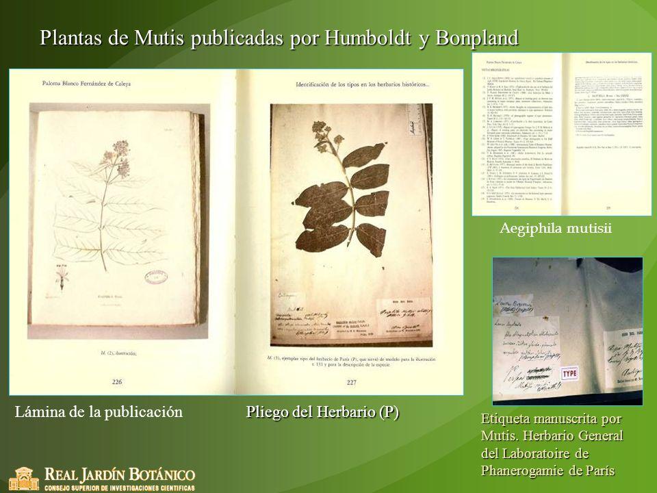 Plantas de Mutis publicadas por Humboldt y Bonpland Pliego del Herbario (P) Etiqueta manuscrita por Mutis. Herbario General del Laboratoire de Phanero
