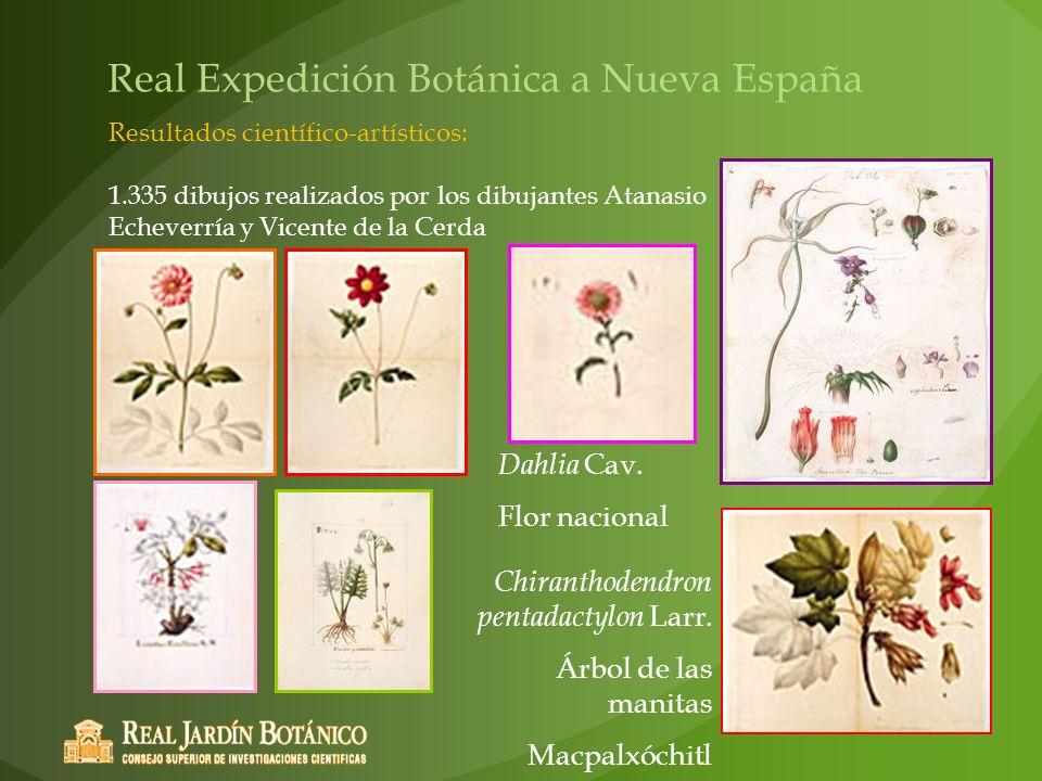 Dahlia Cav. Flor nacional Chiranthodendron pentadactylon Larr. Árbol de las manitas Macpalxóchitl Real Expedición Botánica a Nueva España Resultados c