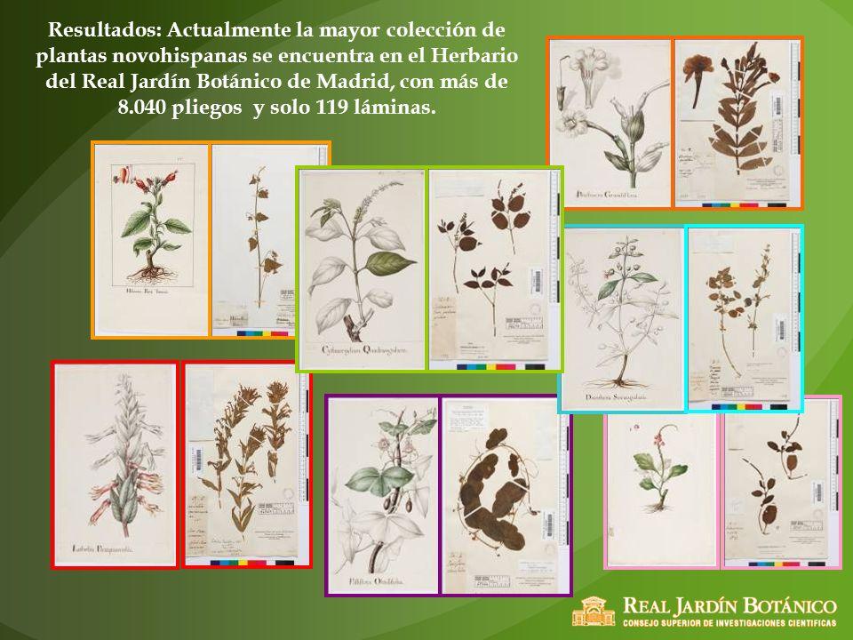 Resultados: Actualmente la mayor colección de plantas novohispanas se encuentra en el Herbario del Real Jardín Botánico de Madrid, con más de 8.040 pl