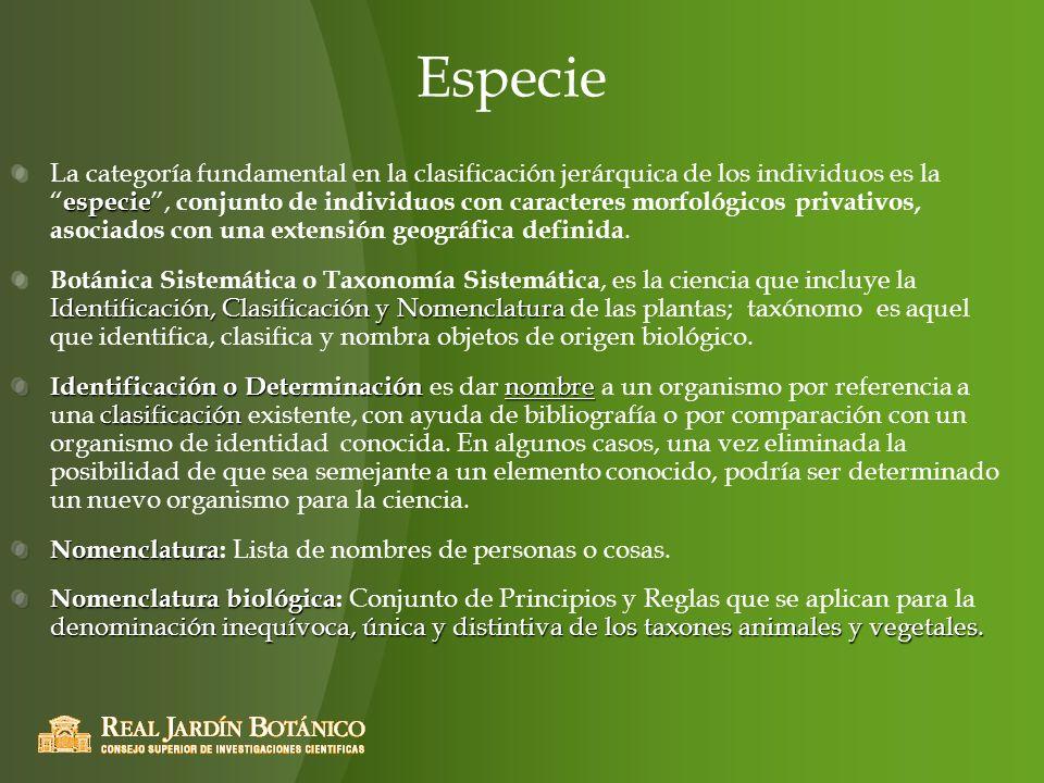 Especie especie La categoría fundamental en la clasificación jerárquica de los individuos es la especie, conjunto de individuos con caracteres morfoló