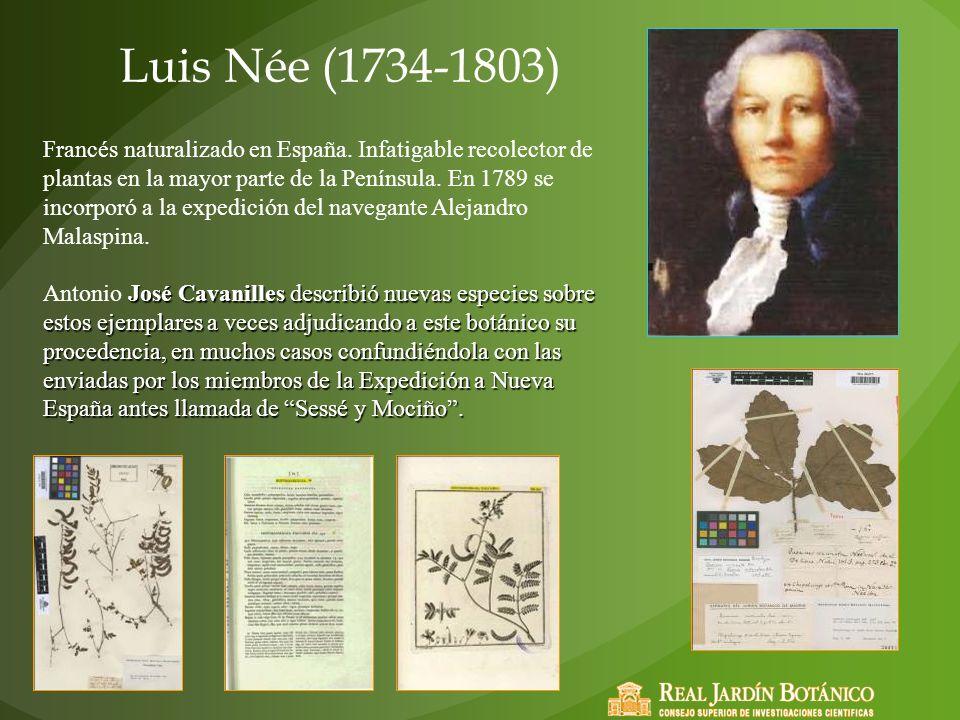 Luis Née (1734-1803) Francés naturalizado en España. Infatigable recolector de plantas en la mayor parte de la Península. En 1789 se incorporó a la ex