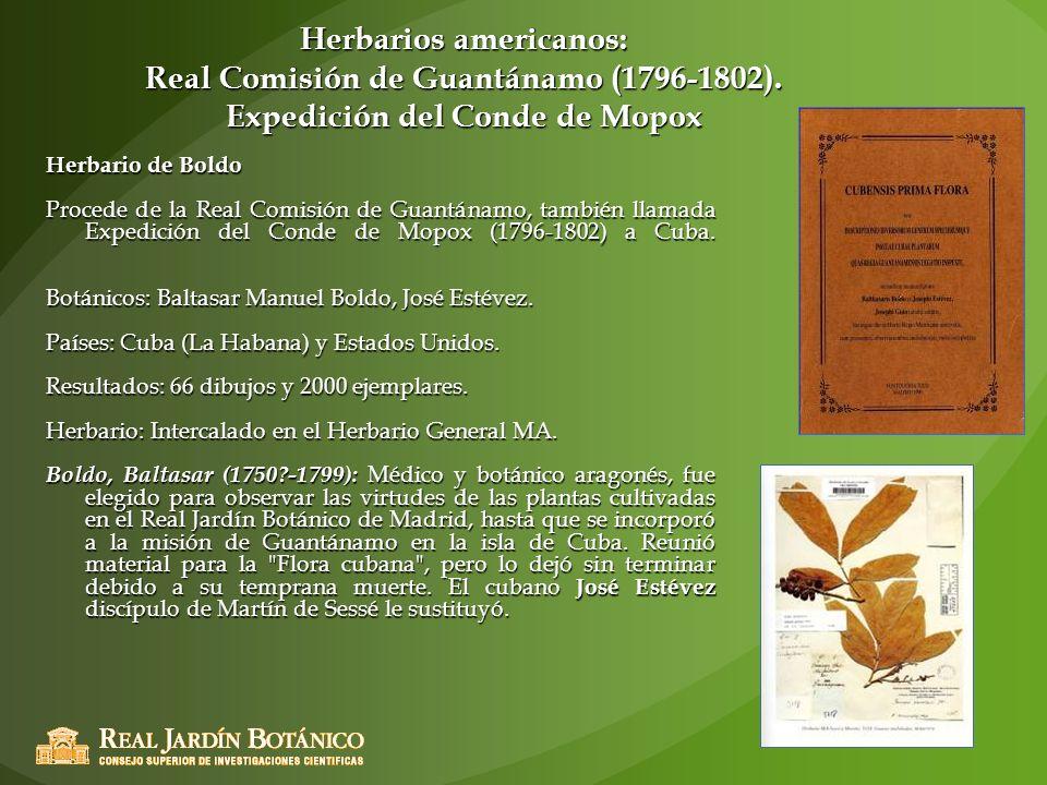 Herbarios americanos: Real Comisión de Guantánamo (1796-1802). Expedición del Conde de Mopox Herbario de Boldo Procede de la Real Comisión de Guantána
