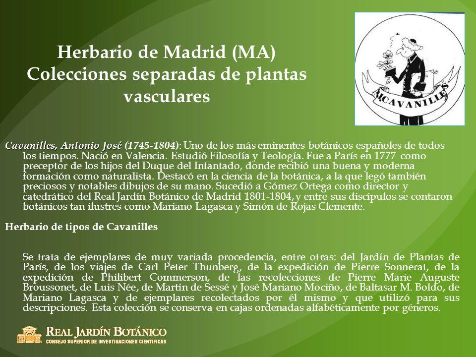 Herbario de Madrid (MA) Colecciones separadas de plantas vasculares Cavanilles, Antonio José Cavanilles, Antonio José (1745-1804) : Uno de los más emi