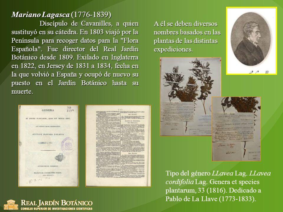 Mariano Lagasca (1776-1839) Discípulo de Cavanilles, a quien sustituyó en su cátedra. En 1803 viajó por la Península para recoger datos para la