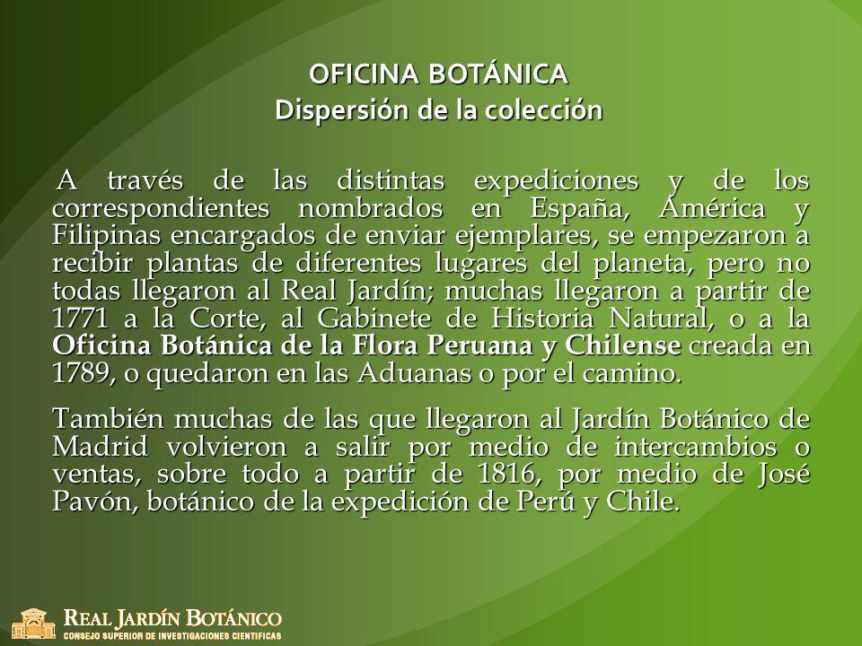 OFICINA BOTÁNICA Dispersión de la colección A través de las distintas expediciones y de los correspondientes nombrados en España, América y Filipinas
