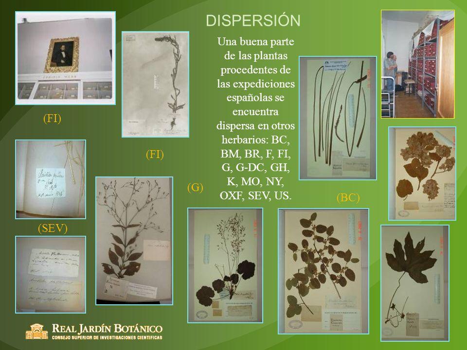(SEV) (FI) (G) (BC) DISPERSIÓN (FI) Una buena parte de las plantas procedentes de las expediciones españolas se encuentra dispersa en otros herbarios: