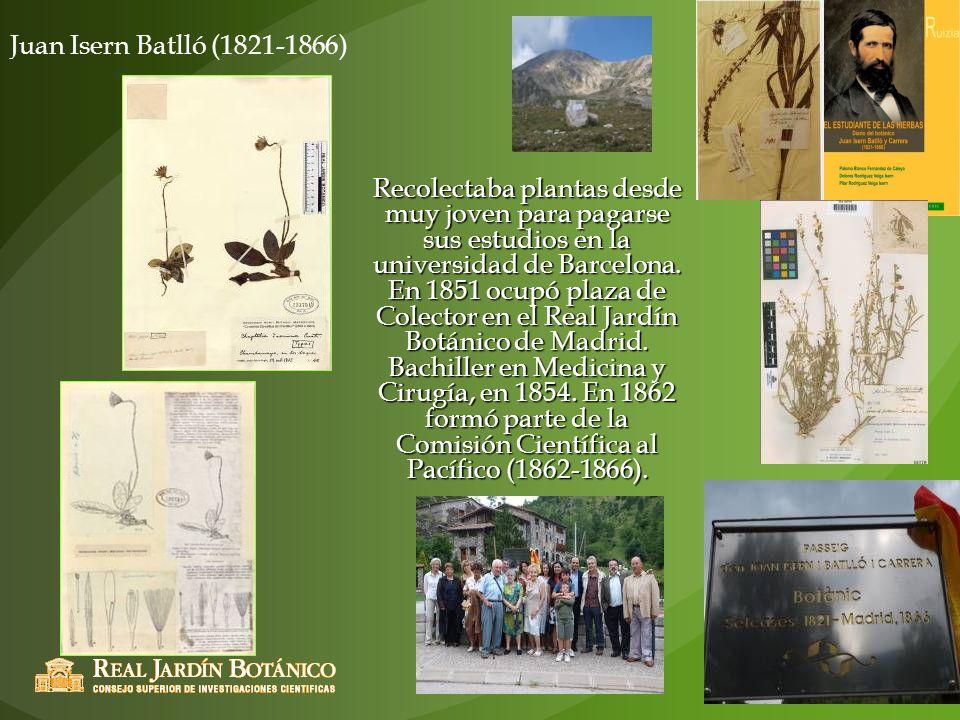 Juan Isern Batlló (1821-1866) Recolectaba plantas desde muy joven para pagarse sus estudios en la universidad de Barcelona. En 1851 ocupó plaza de Col