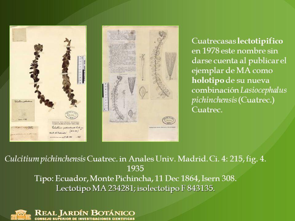 Lectotipo MA 234281; isolectotipo F 843135. Culcitium pichinchensis Cuatrec. in Anales Univ. Madrid. Ci. 4: 215, fig. 4. 1935 Tipo: Ecuador, Monte Pic
