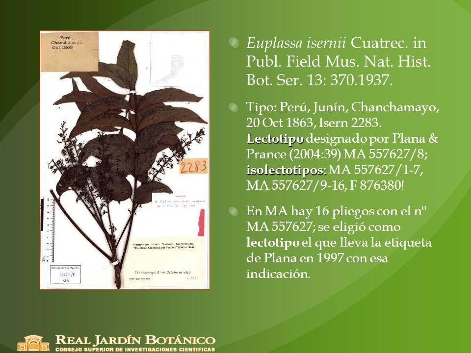 Euplassa isernii Cuatrec. in Publ. Field Mus. Nat. Hist. Bot. Ser. 13: 370.1937. Lectotipo isolectotipos : Tipo: Perú, Junín, Chanchamayo, 20 Oct 1863