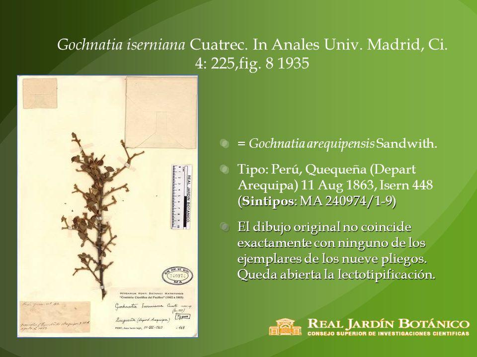 Gochnatia iserniana Cuatrec. In Anales Univ. Madrid, Ci. 4: 225,fig. 8 1935 = Gochnatia arequipensis Sandwith. ( Sintipos : MA 240974/1-9) Tipo: Perú,