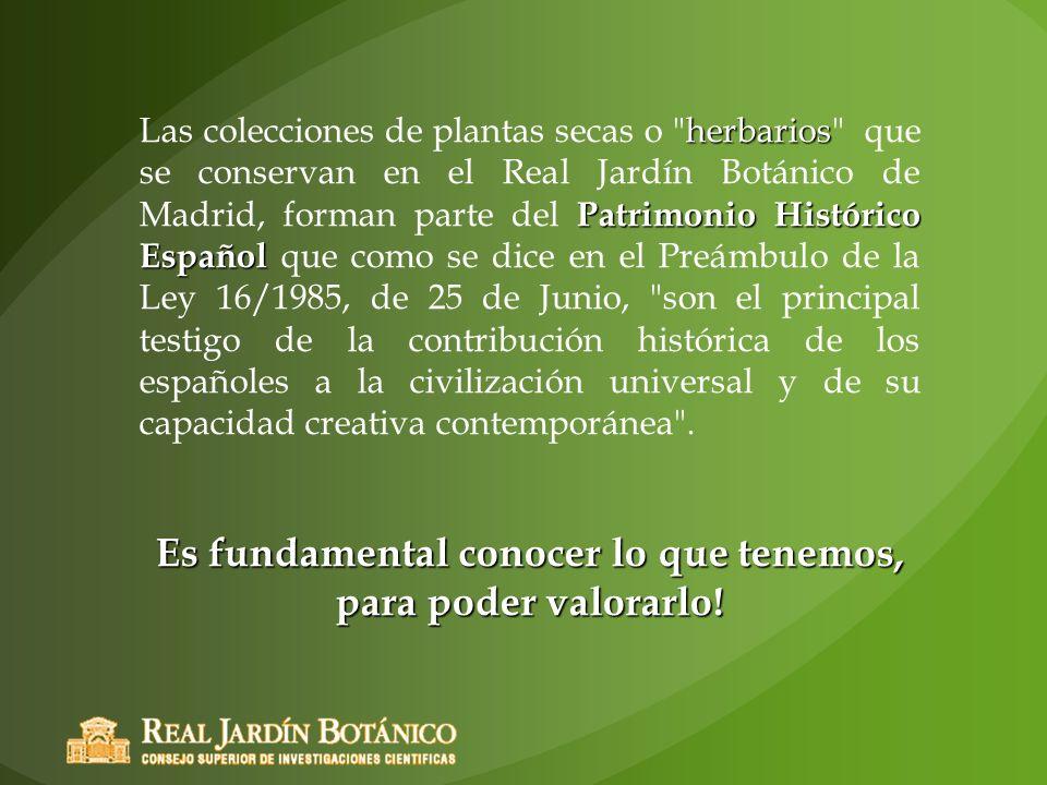 herbarios Patrimonio Histórico Español Las colecciones de plantas secas o
