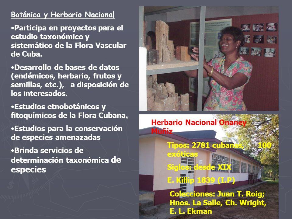 Botánica y Herbario Nacional Participa en proyectos para el estudio taxonómico y sistemático de la Flora Vascular de Cuba.