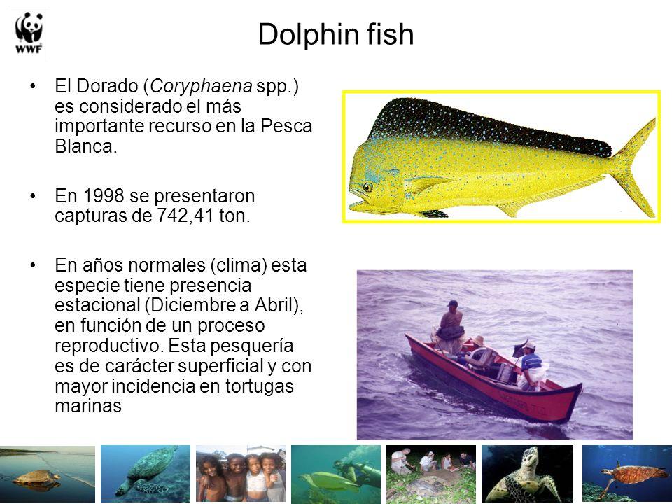 Dolphin fish El Dorado (Coryphaena spp.) es considerado el más importante recurso en la Pesca Blanca.