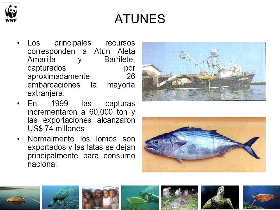 Censo pesquero artesanal INPA (2001)