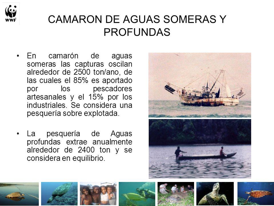 CAMARON DE AGUAS SOMERAS Y PROFUNDAS En camarón de aguas someras las capturas oscilan alrededor de 2500 ton/ano, de las cuales el 85% es aportado por los pescadores artesanales y el 15% por los industriales.