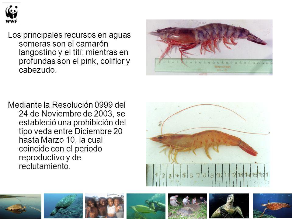 Los principales recursos en aguas someras son el camarón langostino y el tití; mientras en profundas son el pink, coliflor y cabezudo.