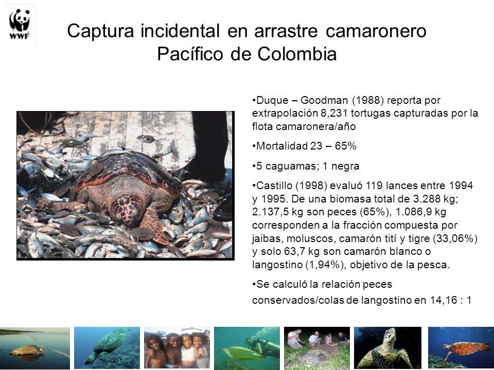 Captura incidental en arrastre camaronero Pacífico de Colombia Duque – Goodman (1988) reporta por extrapolación 8,231 tortugas capturadas por la flota camaronera/año Mortalidad 23 – 65% 5 caguamas; 1 negra Castillo (1998) evaluó 119 lances entre 1994 y 1995.
