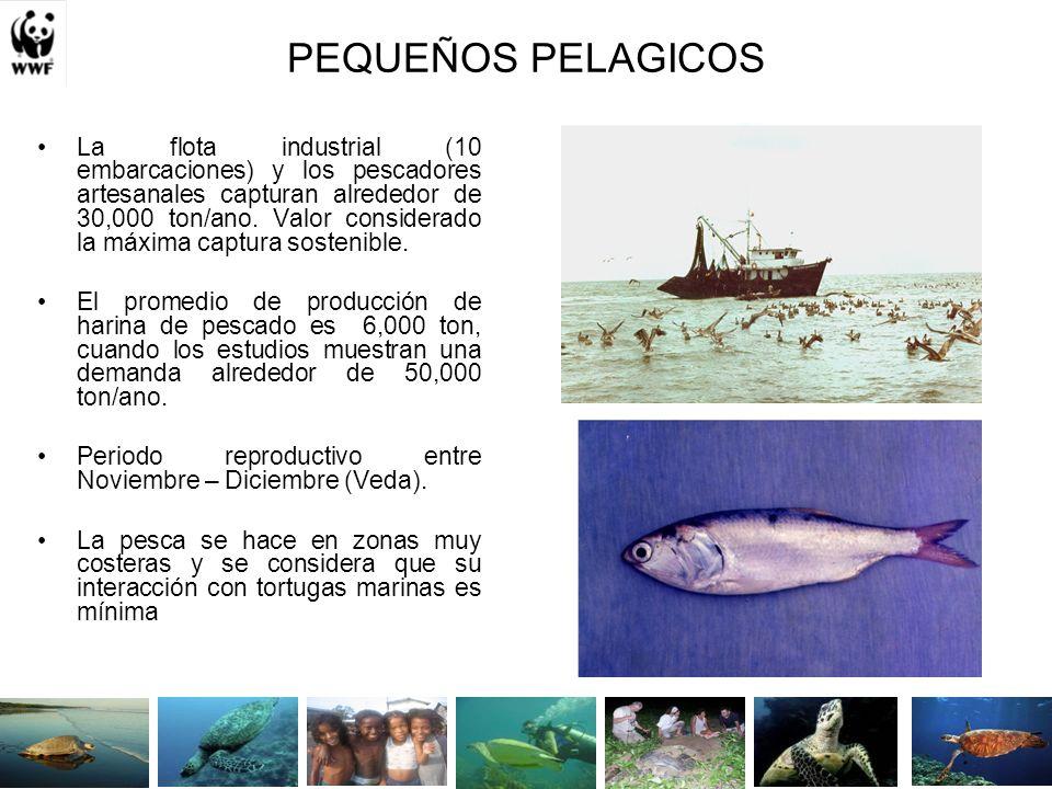 PEQUEÑOS PELAGICOS La flota industrial (10 embarcaciones) y los pescadores artesanales capturan alrededor de 30,000 ton/ano.