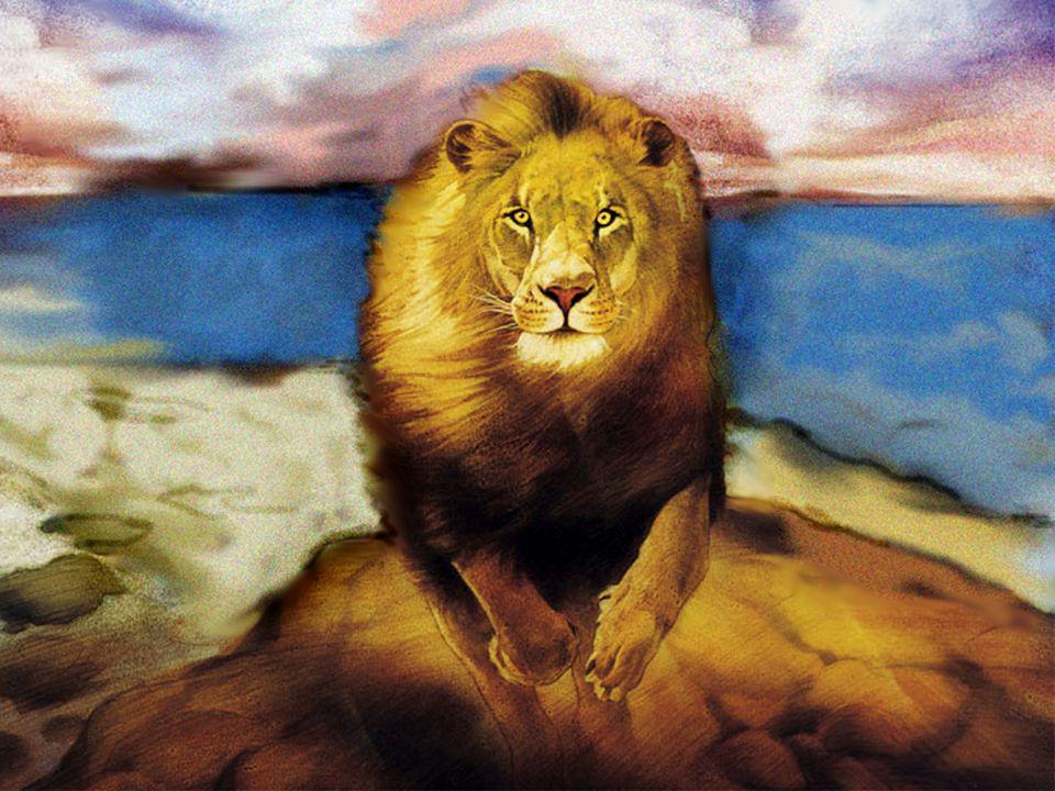 Amos 5:19 Como el que huye de delante del león, y se topa con el oso; ó si entrare en casa y arrimare su mano á la pared, y le muerda la culebra.