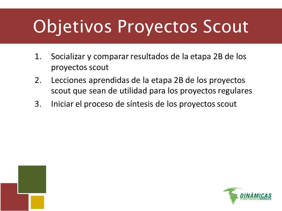 Objetivos Proyectos Scout 1.Socializar y comparar resultados de la etapa 2B de los proyectos scout 2.Lecciones aprendidas de la etapa 2B de los proyectos scout que sean de utilidad para los proyectos regulares 3.Iniciar el proceso de síntesis de los proyectos scout