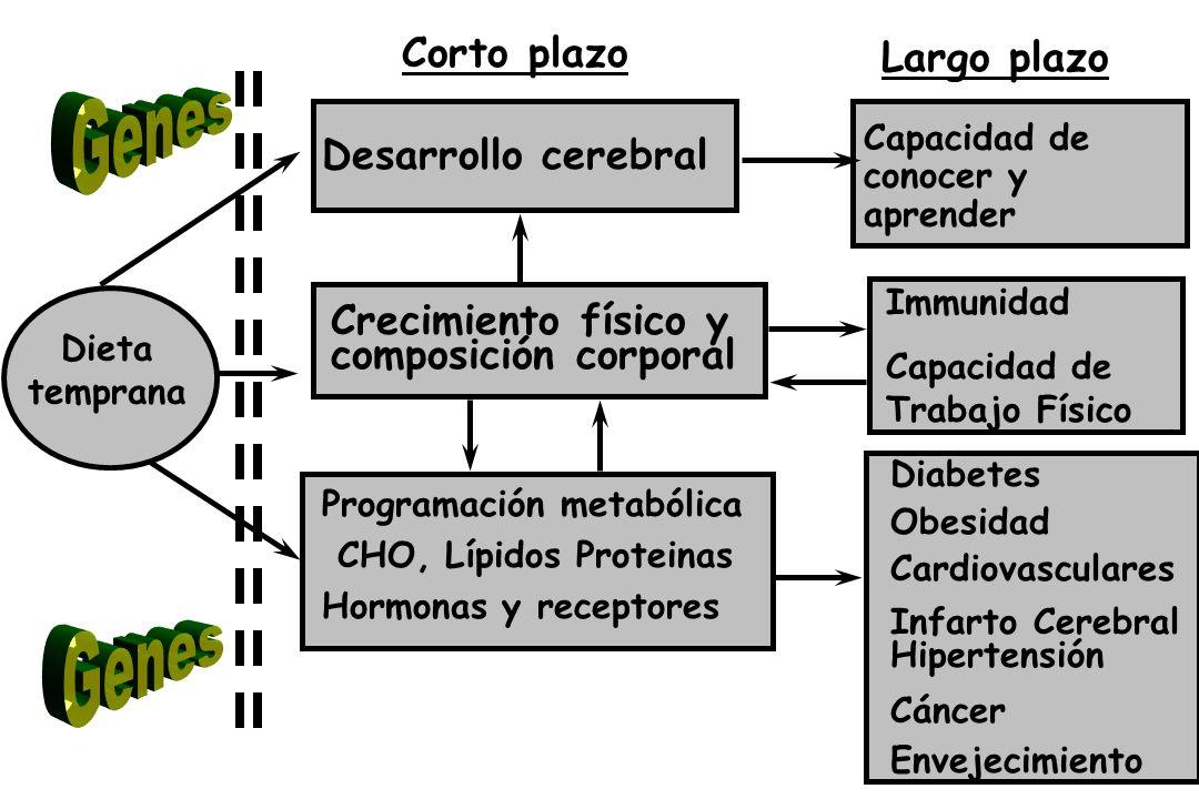 Norte Centro M é xico, D.F.SurNacional % 1988199919881999198819991988199919881999 Cambios Dietarios en México 88/99 NorteCentroMéxico, D.F.SurNacional