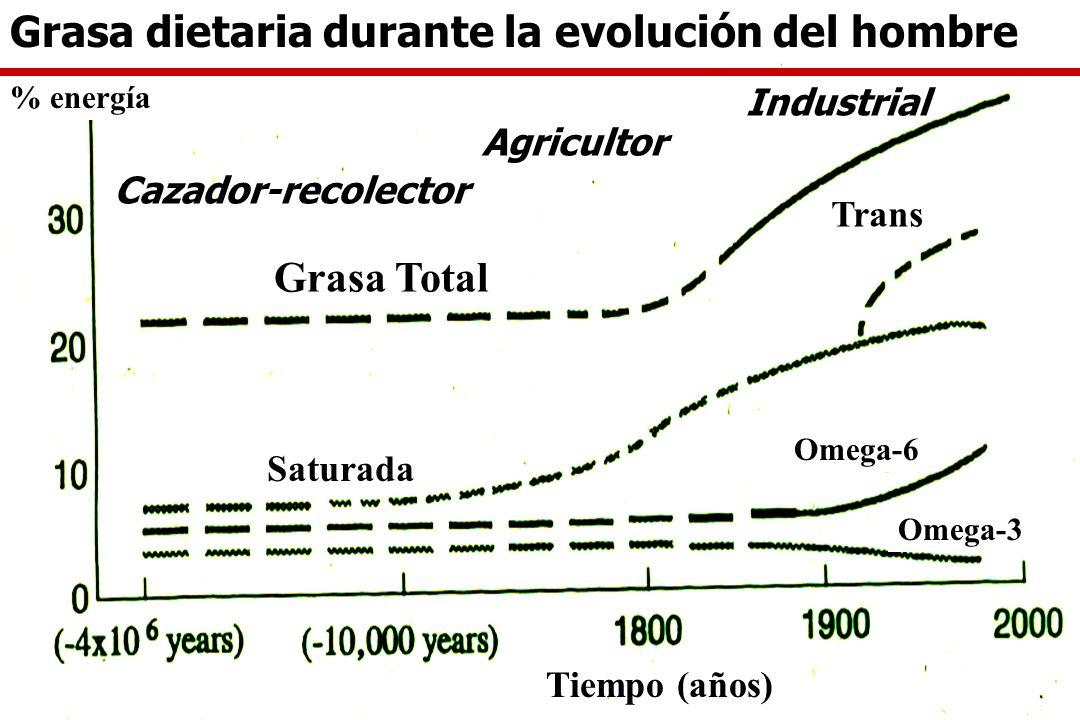 Calidad de las Grasas en la Nutrición Saturadas (C12:0, C14:0, C16:0, C18:0) Ac grasos trans (grasas hidrogenadas) Ac grasos monoinsaturados (18:1) Sa