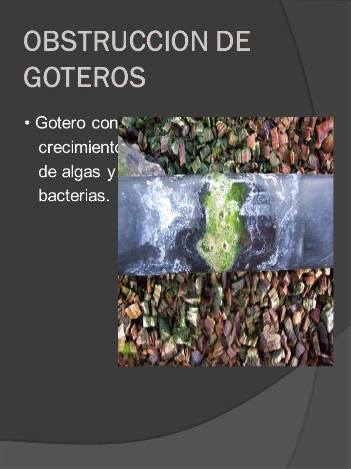 OBSTRUCCION DE GOTEROS Gotero con crecimiento de algas y bacterias.