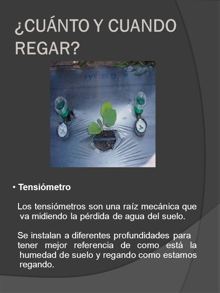 ¿CUÁNTO Y CUANDO REGAR? Tensiómetro Los tensiómetros son una raíz mecánica que va midiendo la pérdida de agua del suelo. Se instalan a diferentes prof