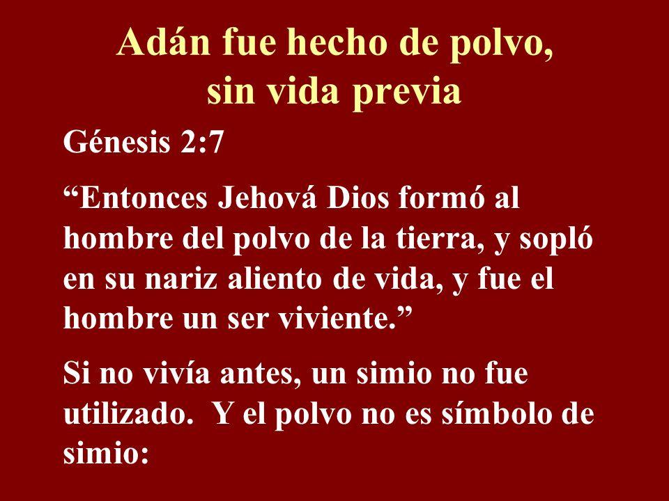 Adán fue hecho de polvo, sin vida previa Génesis 2:7 Entonces Jehová Dios formó al hombre del polvo de la tierra, y sopló en su nariz aliento de vida, y fue el hombre un ser viviente.