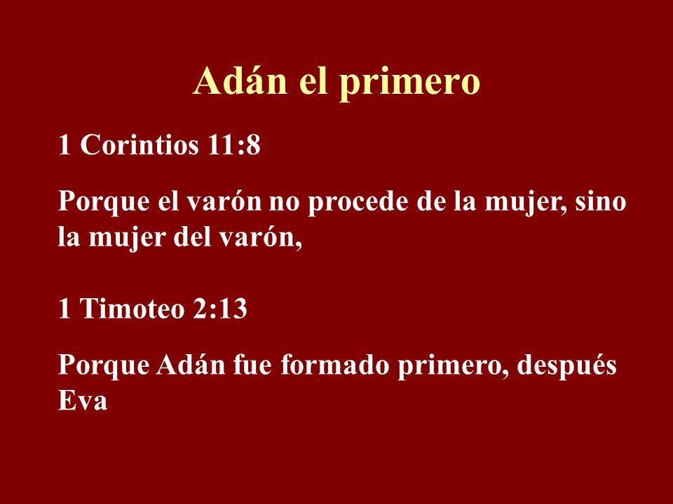 Adán el primero 1 Corintios 11:8 Porque el varón no procede de la mujer, sino la mujer del varón, 1 Timoteo 2:13 Porque Adán fue formado primero, después Eva