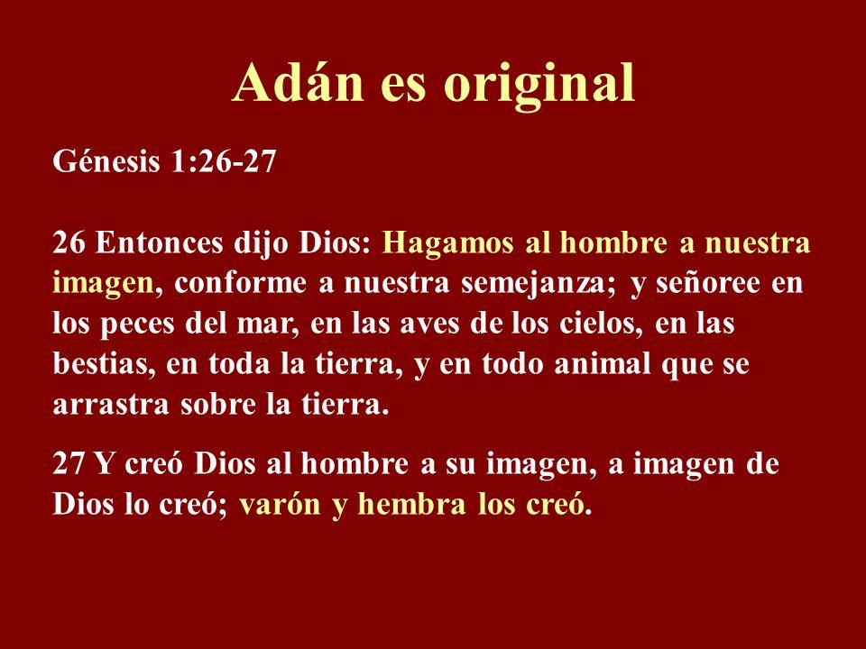 Adán es original Génesis 1:26-27 26 Entonces dijo Dios: Hagamos al hombre a nuestra imagen, conforme a nuestra semejanza; y señoree en los peces del mar, en las aves de los cielos, en las bestias, en toda la tierra, y en todo animal que se arrastra sobre la tierra.
