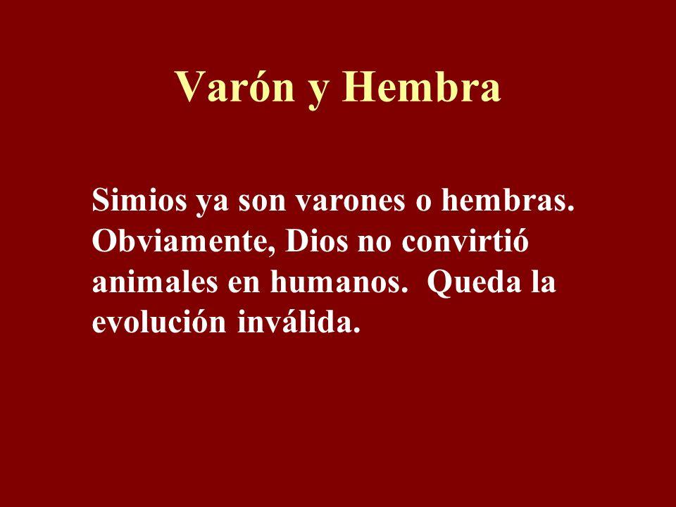 Varón y Hembra Simios ya son varones o hembras.Obviamente, Dios no convirtió animales en humanos.