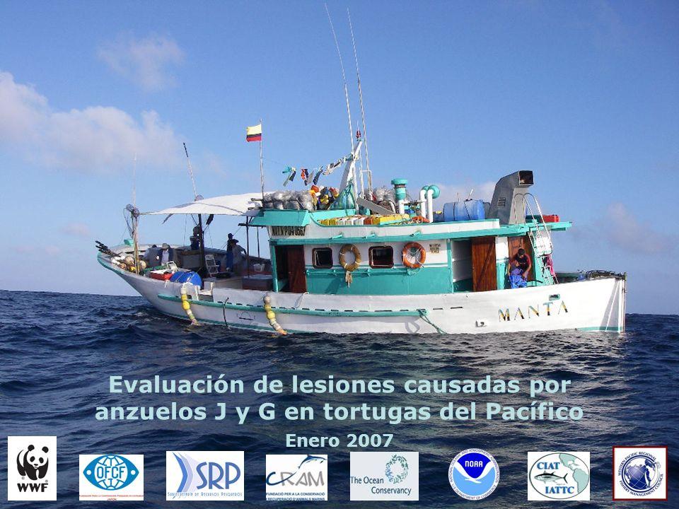 Evaluación de lesiones causadas por anzuelos J y G en tortugas del Pacífico Enero 2007