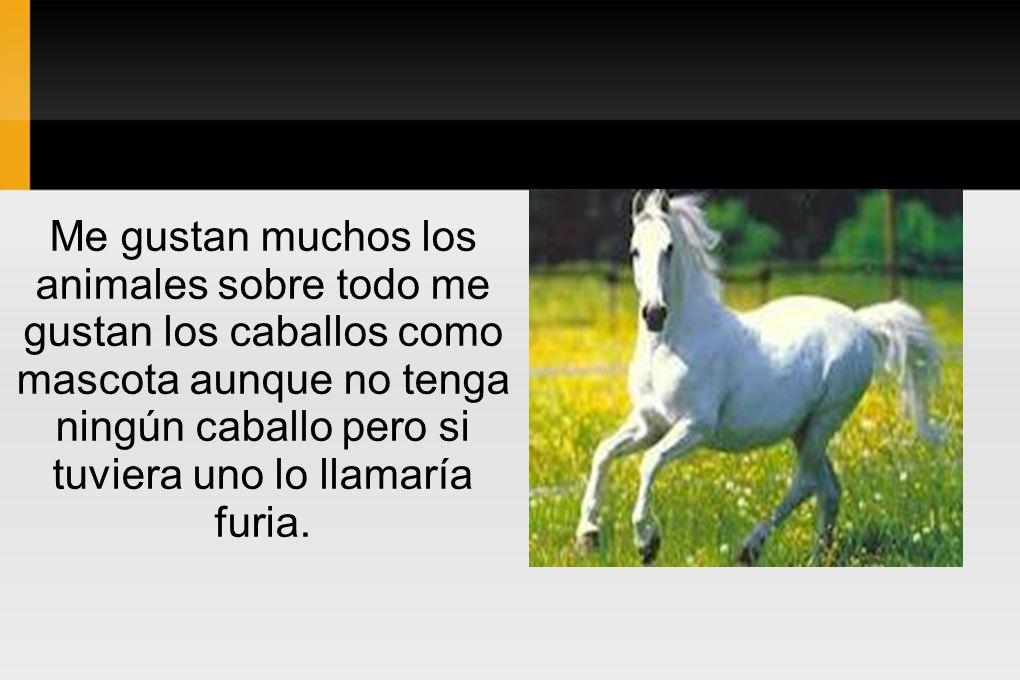 Me gustan muchos los animales sobre todo me gustan los caballos como mascota aunque no tenga ningún caballo pero si tuviera uno lo llamaría furia.