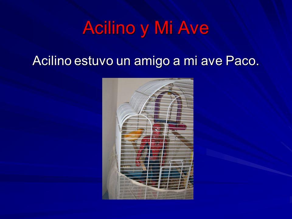 Acilino y Mi Ave Acilino estuvo un amigo a mi ave Paco.