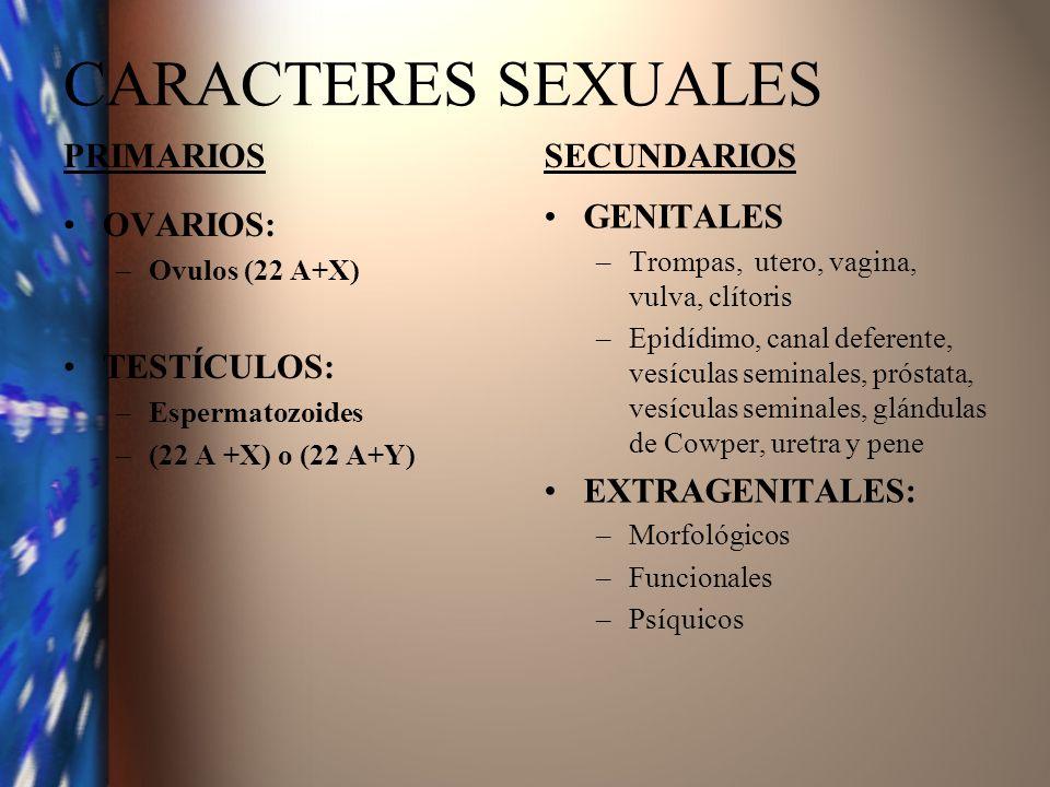 CARACTERES SEXUALES PRIMARIOS OVARIOS: –Ovulos (22 A+X) TESTÍCULOS: –Espermatozoides –(22 A +X) o (22 A+Y) SECUNDARIOS GENITALES –Trompas, utero, vagi