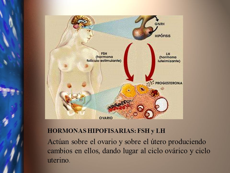 HORMONAS HIPOFISARIAS: FSH y LH Actúan sobre el ovario y sobre el útero produciendo cambios en ellos, dando lugar al ciclo ovárico y ciclo uterino.