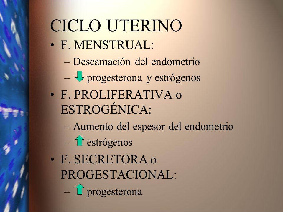 CICLO UTERINO F. MENSTRUAL: –Descamación del endometrio – progesterona y estrógenos F. PROLIFERATIVA o ESTROGÉNICA: –Aumento del espesor del endometri
