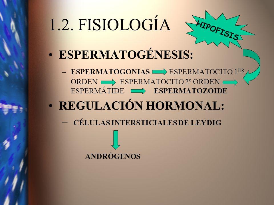 1.2. FISIOLOGÍA ESPERMATOGÉNESIS: –ESPERMATOGONIAS ESPERMATOCITO 1 ER ORDEN ESPERMATOCITO 2º ORDEN ESPERMÁTIDE ESPERMATOZOIDE REGULACIÓN HORMONAL: – C
