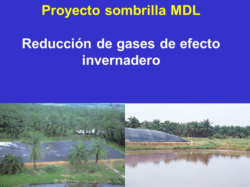 12 Proyecto sombrilla MDL Reducción de gases de efecto invernadero