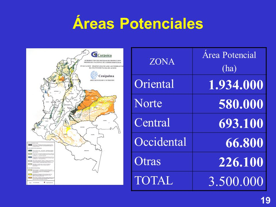 19 ZONA Área Potencial (ha) Oriental 1.934.000 Norte 580.000 Central 693.100 Occidental 66.800 Otras 226.100 TOTAL 3.500.000 Áreas Potenciales