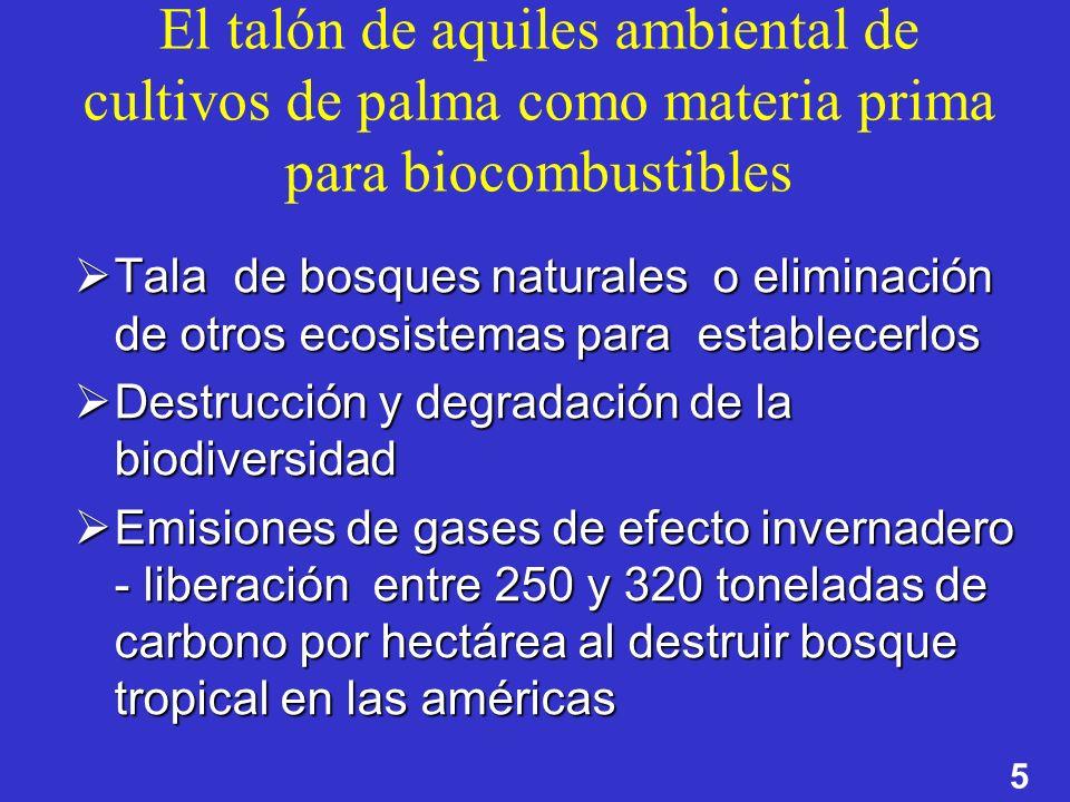 5 El talón de aquiles ambiental de cultivos de palma como materia prima para biocombustibles Tala de bosques naturales o eliminación de otros ecosiste