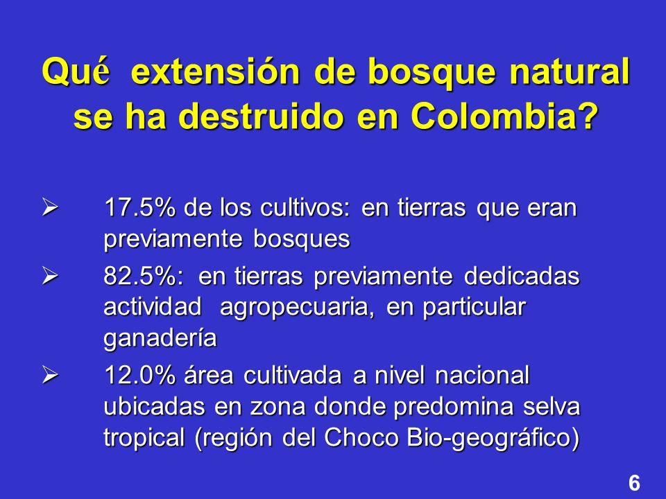 6 Qu é extensión de bosque natural se ha destruido en Colombia? 17.5% de los cultivos: en tierras que eran previamente bosques 17.5% de los cultivos: