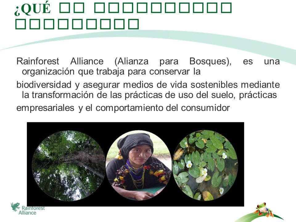 ¿QUÉ ES RAINFOREST ALLIANCE? Rainforest Alliance (Alianza para Bosques), es una organización que trabaja para conservar la biodiversidad y asegurar me